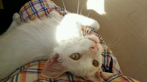 アウス猫;圭君④