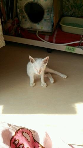 アウス猫;圭君②
