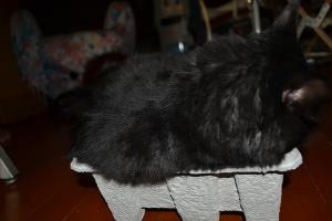 shiru箱