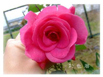 garden2012-11-10.jpg