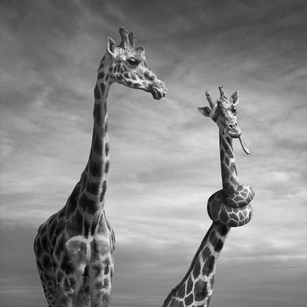 surreal-photo-manipulation-dariusz-klimczak-16.jpg