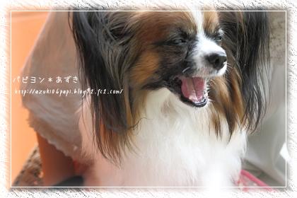 20120922_IMG_3619.jpg