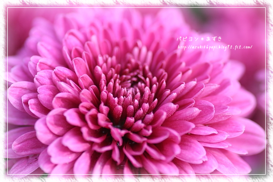 20121110_IMG_4383.jpg