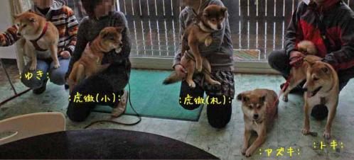IMG_1868+AZUKI.jpg