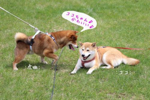 IMG_2545+AZUKI.jpg