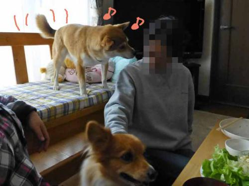 P1120112+AZUKI.jpg