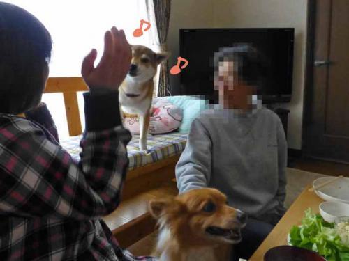 P1120113+AZUKI.jpg