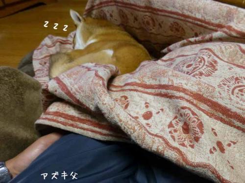 P1120197+AZUKI.jpg