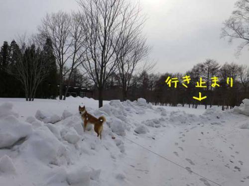 P1120368+AZUKI.jpg