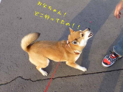 P1130168+AZUKI.jpg