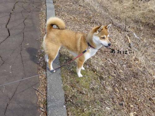 P1130251+AZUKI.jpg