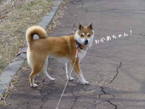 P1130253+AZUKI.jpg