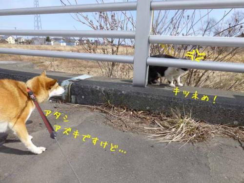 P1130272+AZUKII.jpg