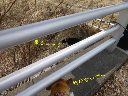 P1130273+AZUKI.jpg