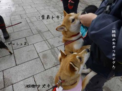 P1130302+AZUKI.jpg