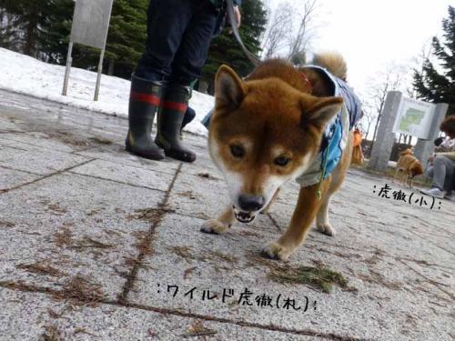 P1130309+AZUKI.jpg