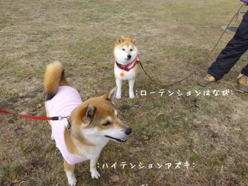 P1130344+AZUKI.jpg