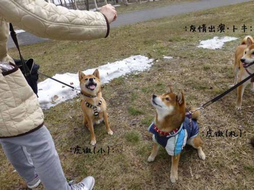 P1130384+AZUKI.jpg