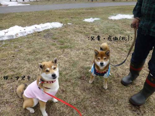 P1130389+AZUKI.jpg