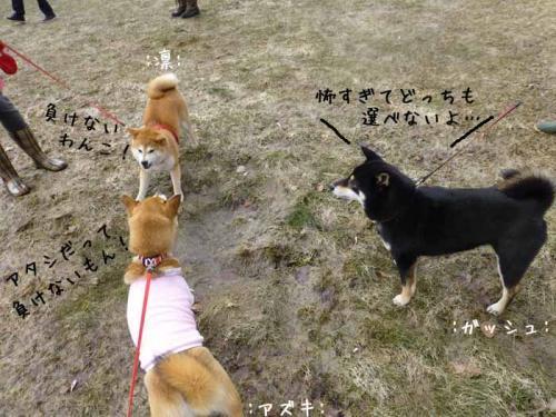 P1130430+AZUKI.jpg