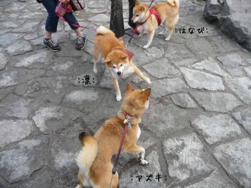 P1260585+AZUKI.jpg
