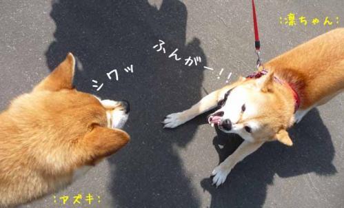 P1370199-AZUKI_20130504023854.jpg