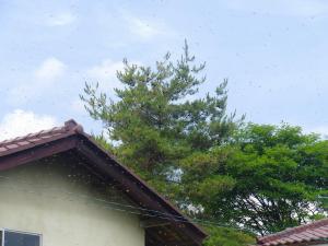 s-20120628CIMG4408.jpg
