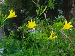 s-20120717CIMG0169.jpg
