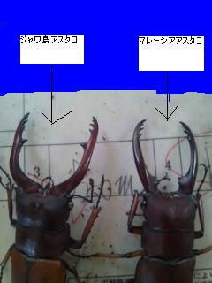 130715-アスタコ比較
