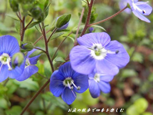 beronikaokufo-do4.jpg