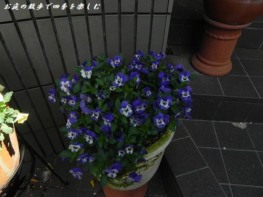 biora9_20130418212059.jpg