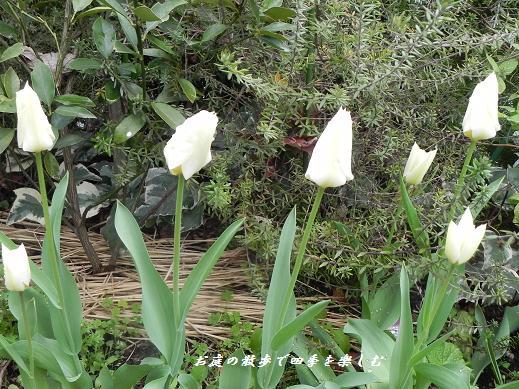 cyu-rip10_20130406091238.jpg
