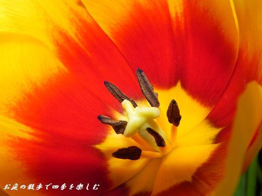 cyu-rip15_20130407175559.jpg