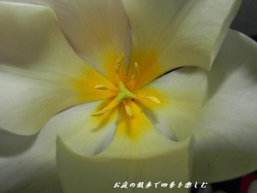 cyu-rip16_20130407175601.jpg