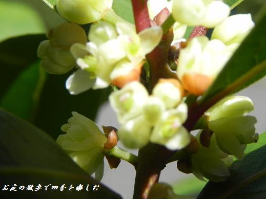 gekkeijyu_20130410061550.jpg