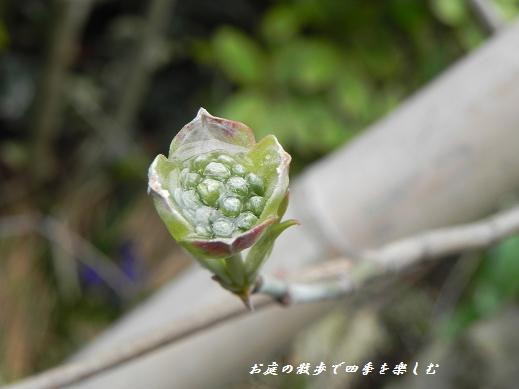 hanamizuki2_20130331135200.jpg