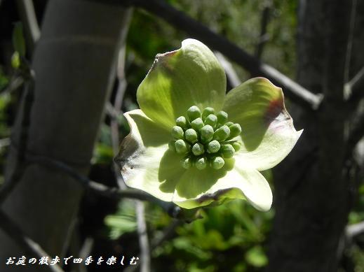 hanamizuki5_20130414171301.jpg