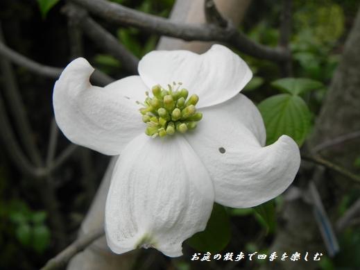 hanamizuki8_20130421220640.jpg