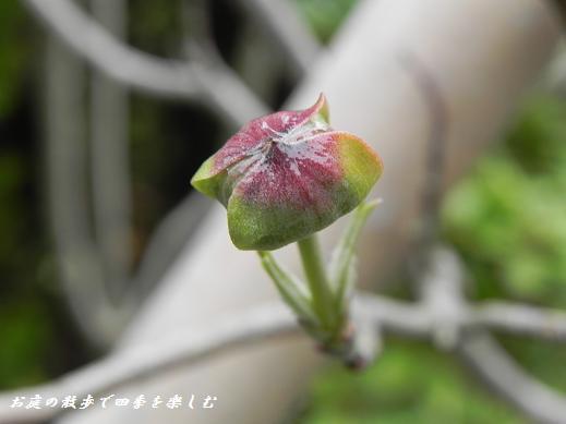 hanamizuki_20130331135159.jpg