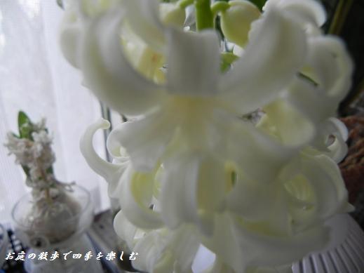hiyasinsu18_20130227093506.jpg