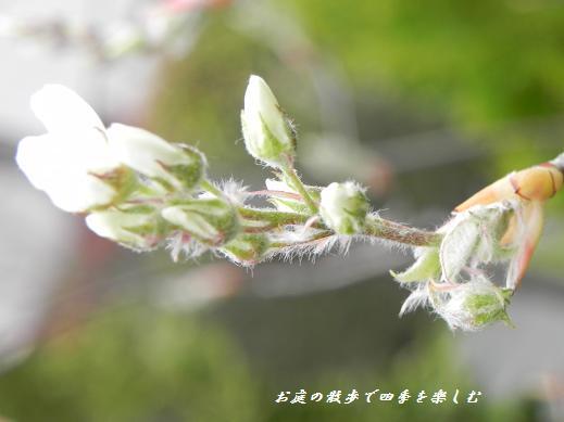 jyu-nberi-3_20130330134940.jpg