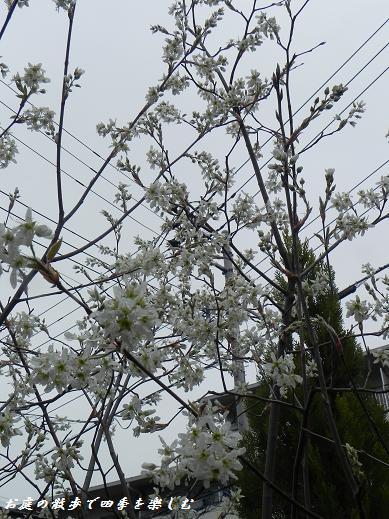 jyu-nberi-4_20130405222800.jpg