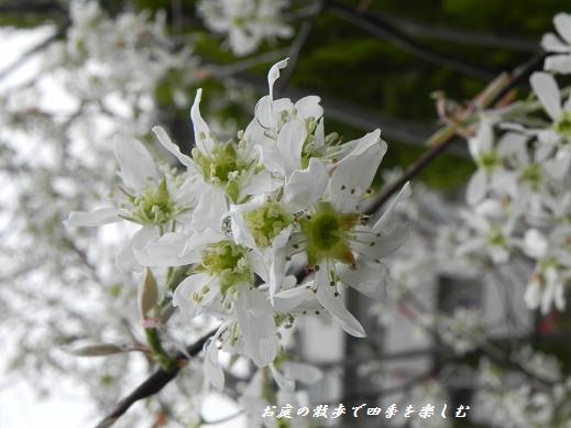 jyu-nberi-5_20130405222803.jpg