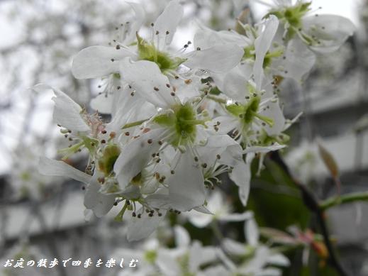 jyu-nberi-6_20130405222806.jpg
