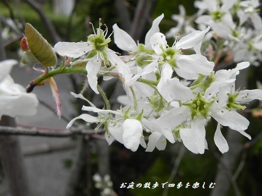 jyu-nberi-7_20130405222758.jpg