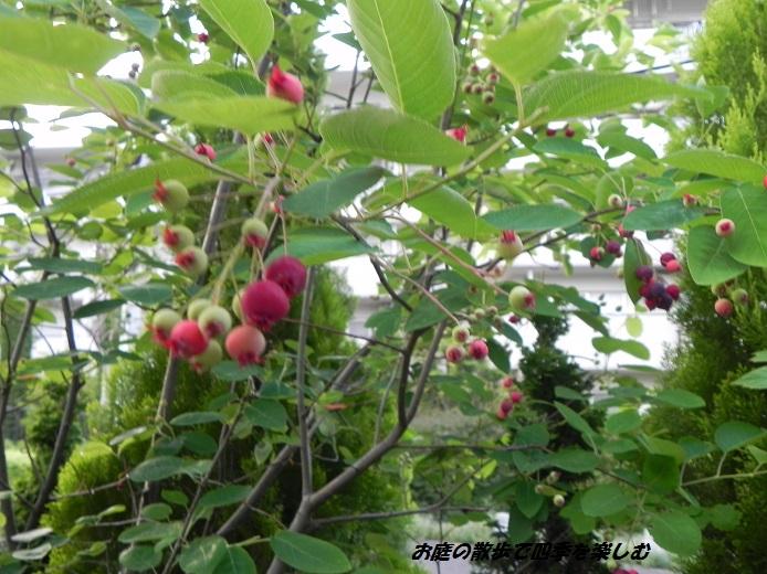 jyu-nberi-7_20130601161044.jpg