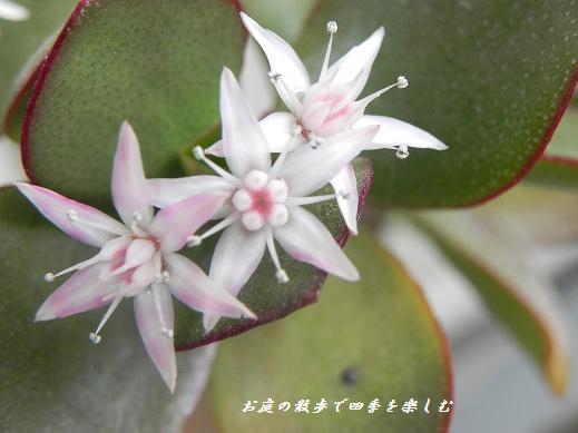 kanenonaruki2_20130402235950.jpg