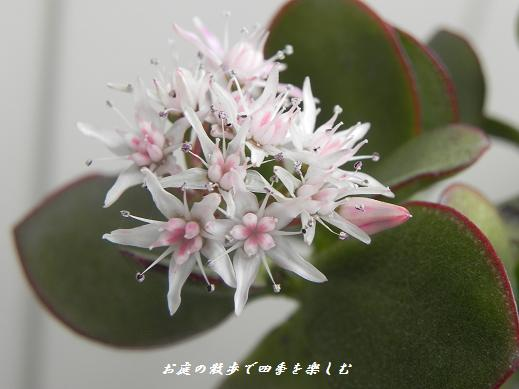 kanenonaruki3_20130402235952.jpg