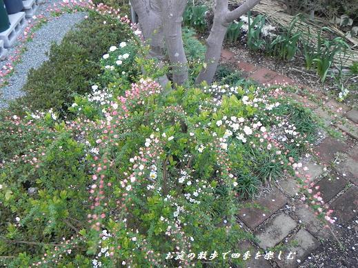pinkuyukiyanagi_20130319102512.jpg