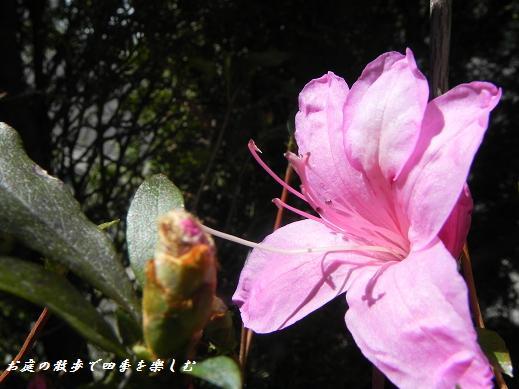 satuki4_20130408222545.jpg